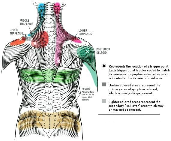 Reflexology Pressure Point Chart   Brian Wong LMT - Trigger POint massage and Myo-Fascial Release