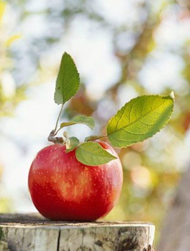 """""""When you pay attention to the apple, that is mindfulness. Then you can look more deeply and in just a very short time you will See the apple seed, the beautiful orchard and the sky, the farmer ... """" Thich Nhat Hanh"""