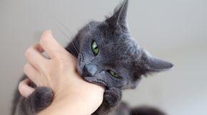 Lorsque je flatte mon chat, après un certain temps il me mord sans raison. Pourtant, il voulait se faire caresser. Est-ce que mon chat est agressif ?
