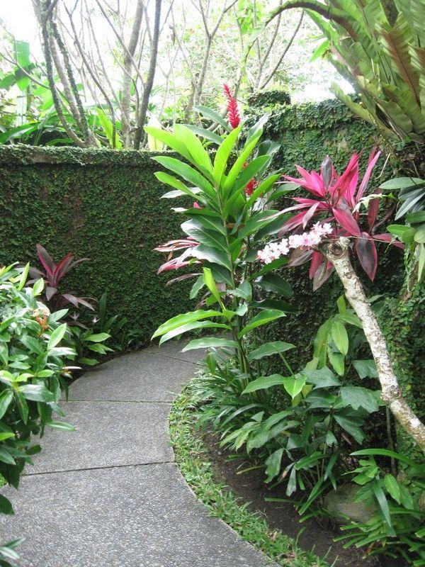 Die besten 25+ tropische Pool Landschaftsbau Ideen auf Pinterest - tropische pflanzen im garten