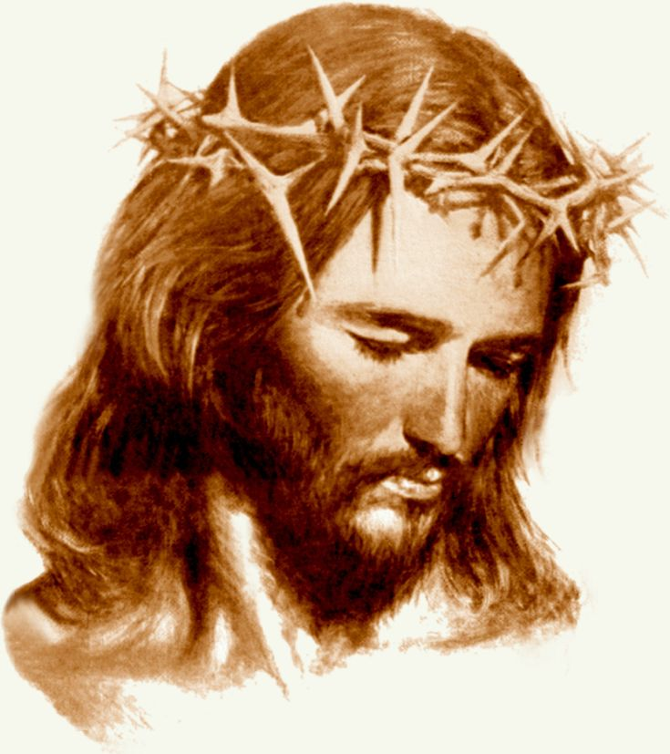 13 best images about crown of thorns on Pinterest ...