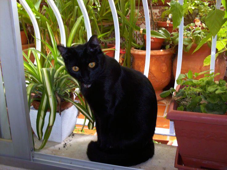 Salem posando en la ventana