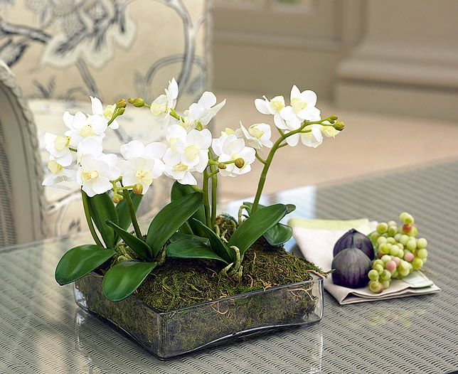 Wonderfully light, fresh and natural looking, this compact contemporary arrangement looks marvellous on a low coffee table, in a hall or on a sideboard. Why not