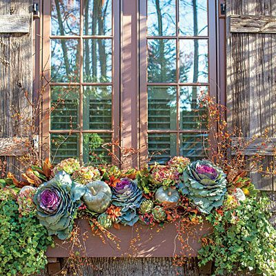 Transitional Window Box  |  Plan ahead for plantings that will transition through the holidays with a few additions. Start with ornamental cabbage, bittersweet, pumpkins, dried hydrangeas, artichokes, and ivy, then add in gilded branches and berries to suit the season.