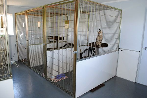 """AirCare Pets Animal Transit Centre  The """"one-stop"""" pet travel shop is located 3.5km from Auckland International Airport's Terminal on the southern approach to the airport, approximately 1km from the south western motorway."""