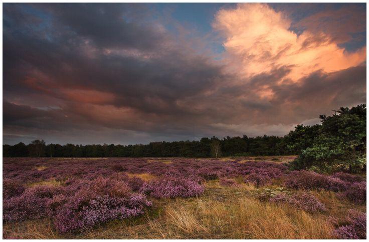 Tijdens zonsondergang heb je kans op prachtige verkleuringen in de lucht boven de paarse heide.