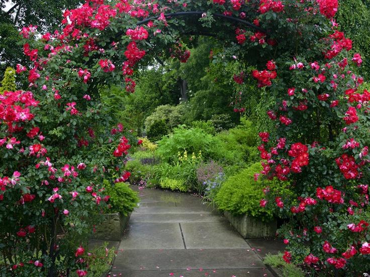 Rose Garden, Cleveland Botanical Garden, Ohio