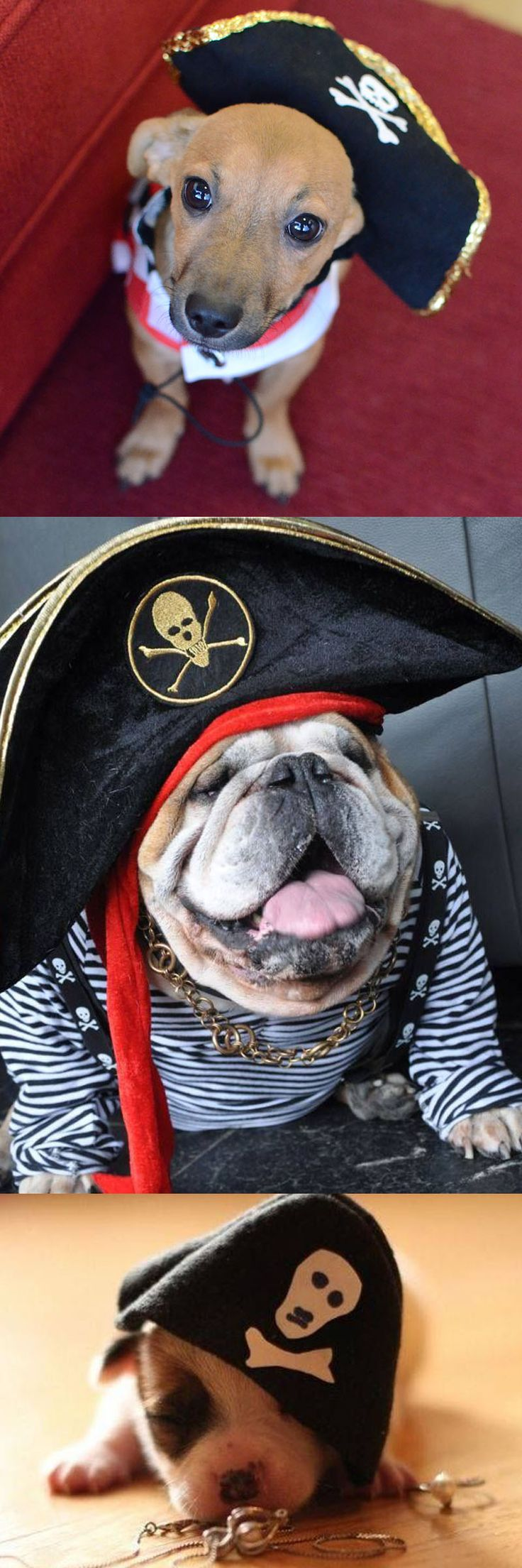 Happy #TalkLikeaPirateDay! If you're missin' any treasure, ye might want t' check what these pups have been buryin' in the backyard!