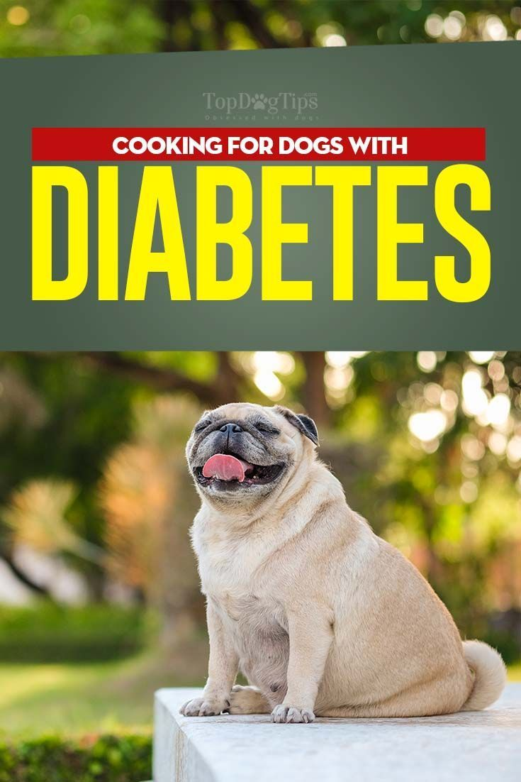 What To Feed A Diabetic Dog And What Not To Diabetic Dog