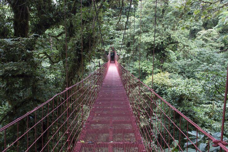 Monteverde Cloud Forest, Costa Rica  Noventa por cento da área é constituída por floresta virgem, o que significa que há uma biodiversidade extremamente elevada, com mais de 2.500 espécies de plantas, 100 espécies de mamíferos, 400 espécies de aves, 120 espécies de répteis e anfíbios, e milhares de insetos