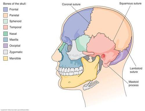 Medical Terminology Flash Cards | K5JMYhI3OOMhTAZR9zfoLg.jpg