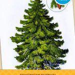 Картинки дерева (для детей) актуальны в любом возрасте: узнать полезные факты о зеленых друзьях интересно и малышам и школьникам. Скачайте красочное пособие на компьютер и распечатайте карточки на цветном принтере. Используйте их как графическое сопровождение к рассказам о видах и функциях деревьев. Обязательно просите ребенка пересказать то, что он услышал ...