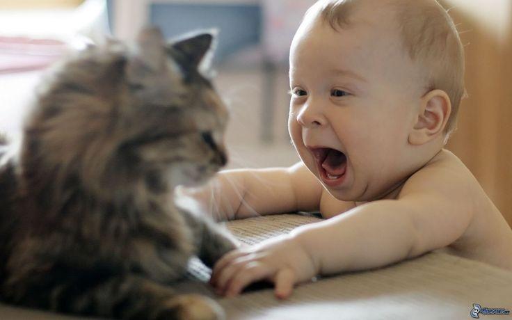 Os gatos são animais maravilhosos e excelentes companhias para crianças. Eles são carinhosos, companheiros e muito amigáveis, mas é preciso que os pais ensinem aos seus filhos a respeitar os limites destes animais. Psicólogos afirmam que o convívio com animais de estimação é muito benéfico para as crianças, pois ajudam-nas a ter um sensode responsabilidade, …