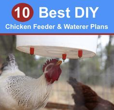 10 Best DIY Chicken Feeder And Waterer Plans And Ideas...http://homestead-and-survival.com/10-best-diy-chicken-feeder-and-waterer-plans-and-ideas/