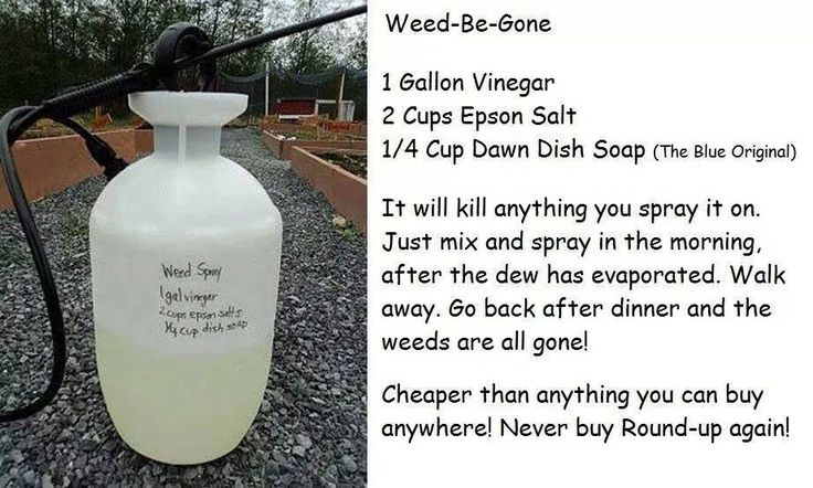 All Natural Weed Killer -  1 gallon white vinegar 2 cups Epsom salts 1/4 cup Dawn dish detergent (blue original)  Spray on in morning, gone by the evening. A great way to NEVER use Round Up ever AGAIN!!!