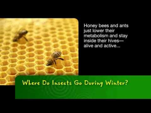 www.bayerus.com - Did you ever wonder where insects go during the winter? Let's make sense of it with science. Bayer Corporation has a strong stake in helpin...