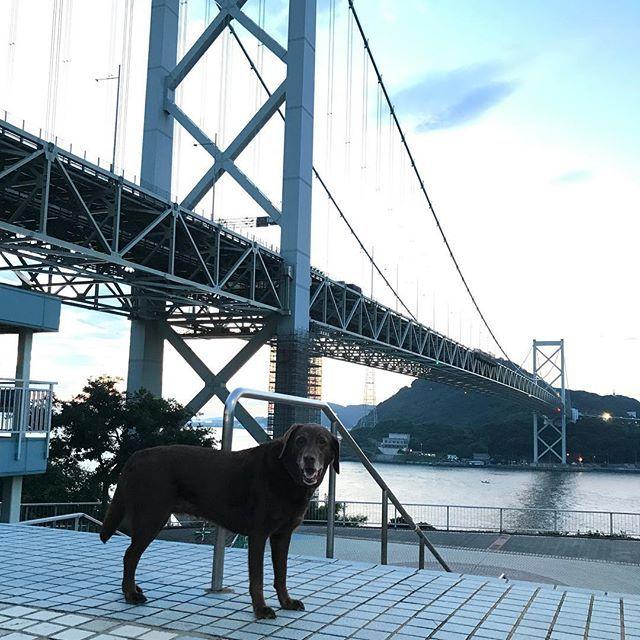 ちょっと暗いですが、午前5時過ぎ。まだ日の出前の関門橋です。 🐾 🐾 #レイ#ラブラドールレトリバー#チョコラブ#ラブラドール#元保護犬#愛犬#rei#madamrei#labradorretriever#chocolatelabrador#labrador#rescuedog