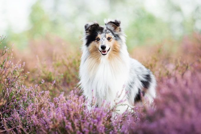 Hundefotografie Tipps Tricks Hundefotografie Pferdefotografie Tierfotografie
