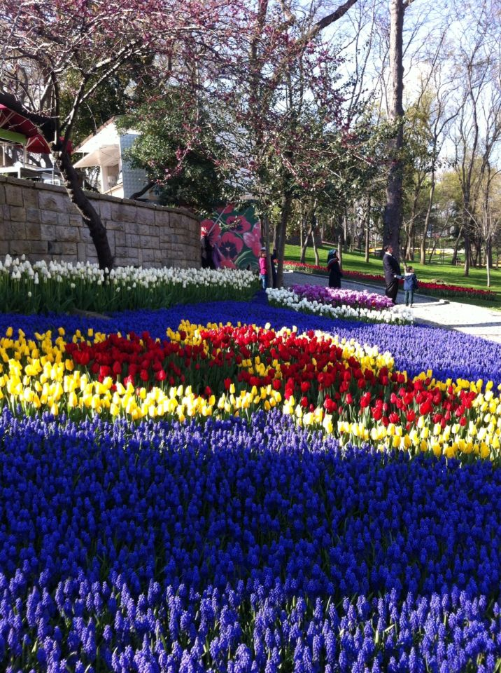 Emirgan Istanbul / tulip