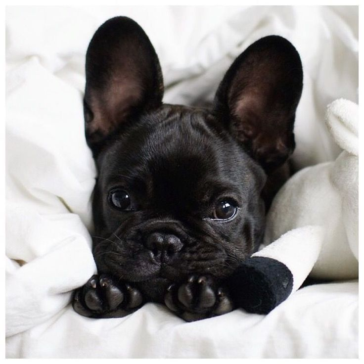Insta Obsession 76 Scent Of Obsession Baby Animals Cute