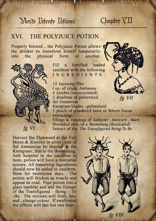 Visuels et illustrations Harry Potter sur le web - 14 - polynectar / polyjuice