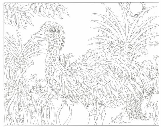 Adult Coloring Pages Kangaroo Colouring In To Color Printable Kangaroos Books Sheets