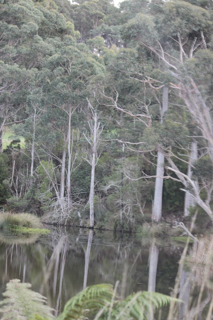geeveston, huon trail, Tasmania