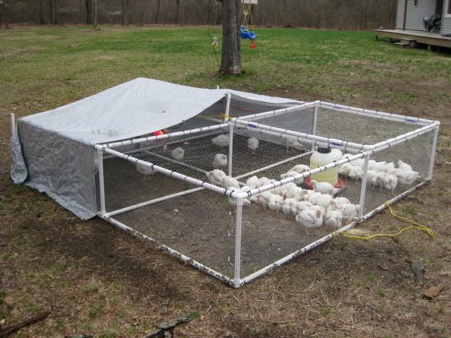 80 best images about chicken coop run ideas on pinterest for Cheap chicken tractor