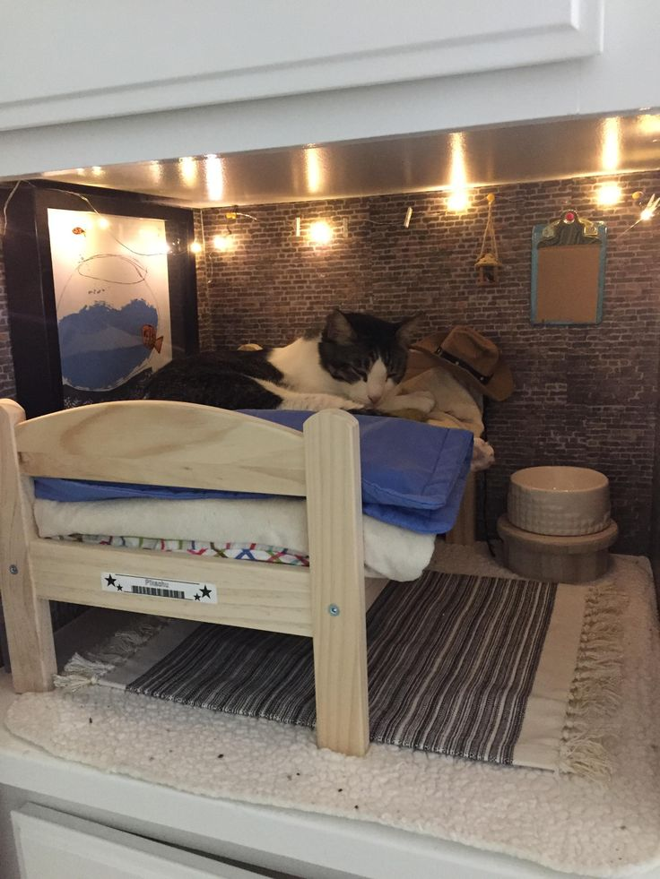 Looking for roommate: studio apartment with shared litterbox catnip friendly short walk to sunny windows and greats views of bird feeders. $1400/month http://ift.tt/2nyhrZ9
