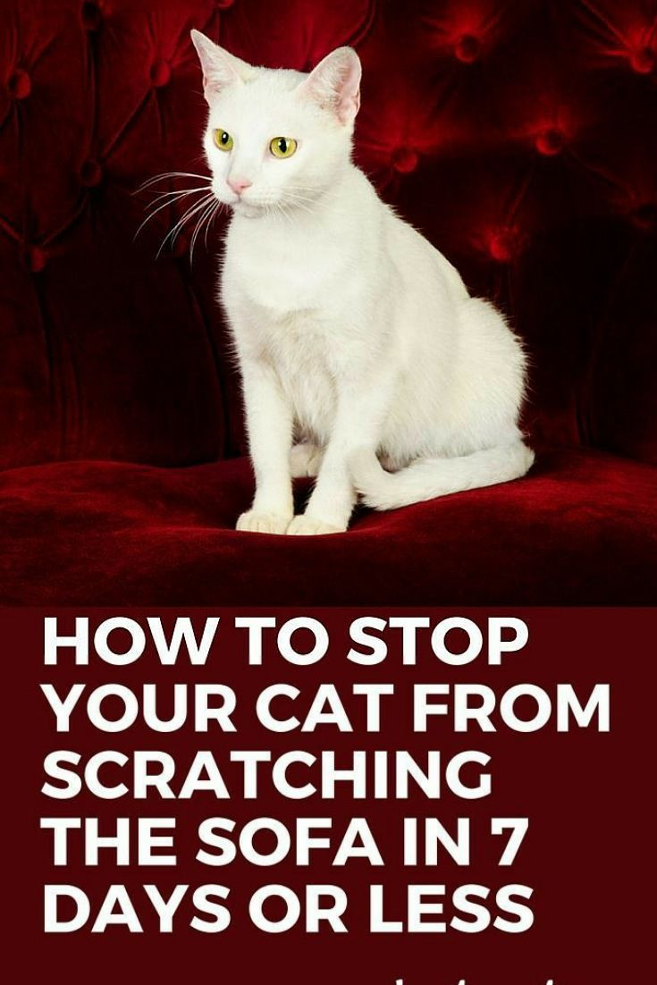 How To Stop Your Cat From Scratching Sofa Cats Cat Care Cat Training