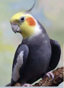 Tropical Parrot Rescue in California  Read more: http://articles.org/motivate-the-bird-lover-in-you/