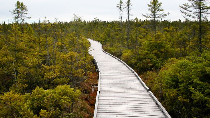 Orono Bog Boardwalk : Things to Do in Bangor : TravelChannel.com