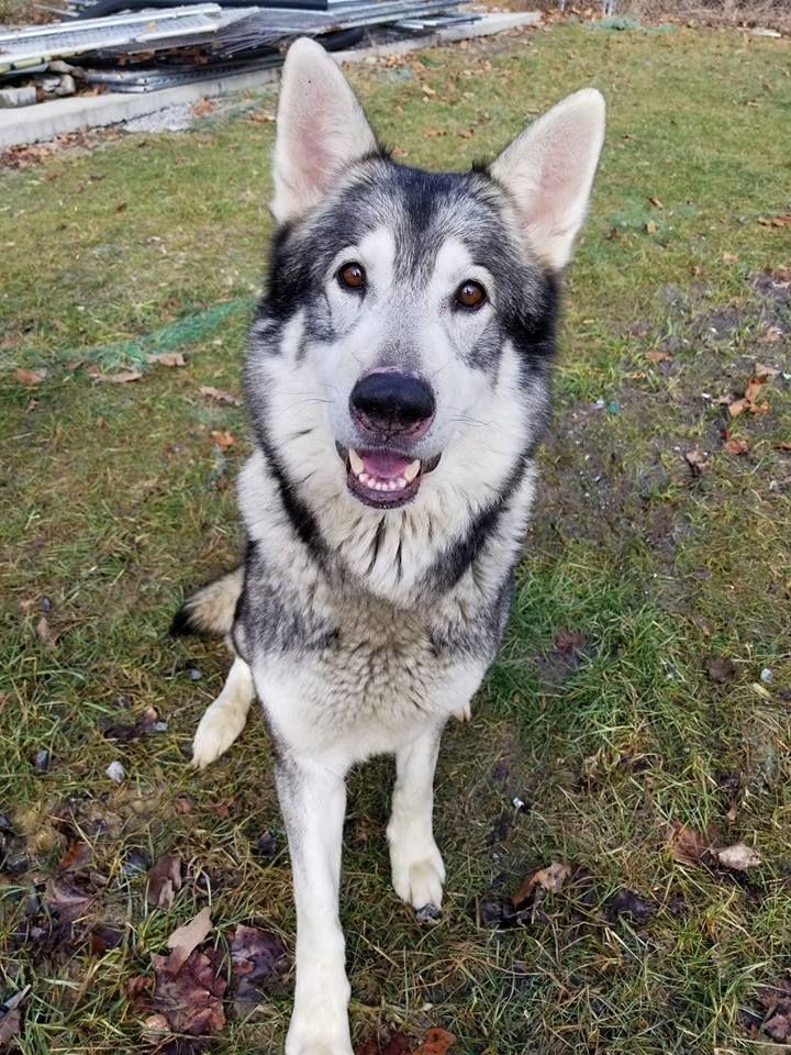 Adopt Loki On Petfinder Animal Rescue Humane Society Loki