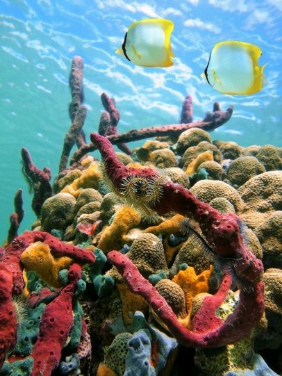 See the natural wonders of Barbados on a sightseeing tour!   http://www.vacationsmadeeasy.com