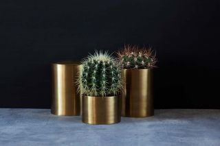 Polished Brass Jars | MintSix Store