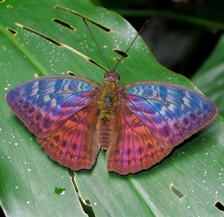 Butterfly beautiful colors