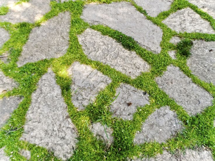 Using plants between pavers softens the look of your pathway or patio and keeps weeds from filling in bare spaces. Wondering what to plant? The information in this article can help. Click here to learn more.
