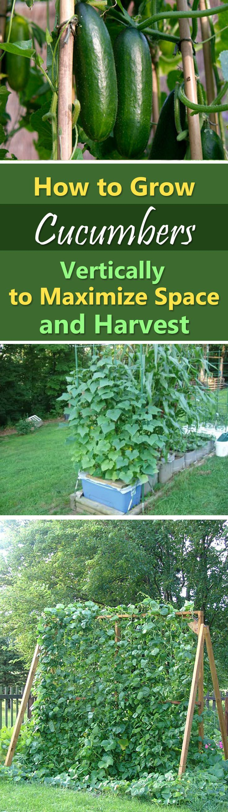 Small backyard veggie garden - Growing Cucumbers Vertically Garden Ideas