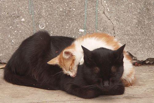 Cats Sleeping, Istanbul
