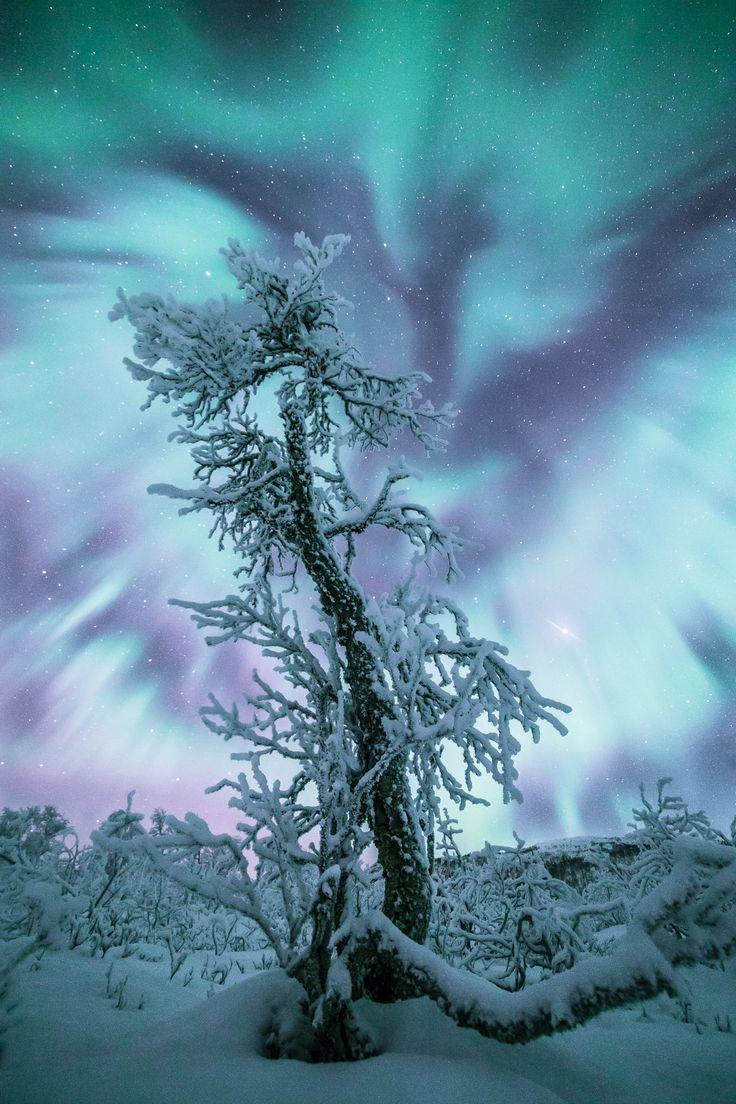 aurora borealis (northern lights), norway   nature + night photography
