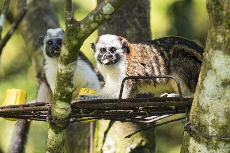 Living Costs Panama 6 Months in Los Altos de Cerro Azul