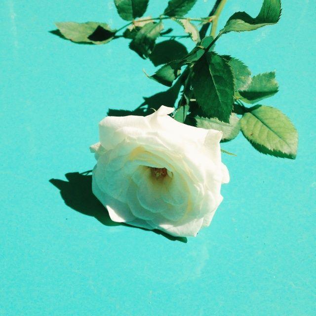 Rose | nazliuygur | VSCO Grid