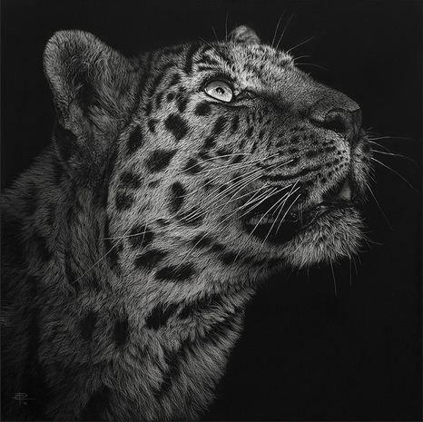 Hudozhnitsa-Cristina-Penescu.-Gratografiya-Northern-Chintse-Leopard
