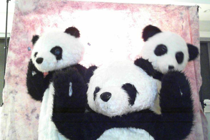 3 pandas in a room