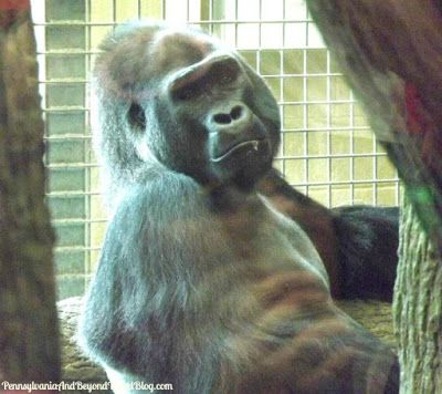 Visiting the Cleveland Metroparks Zoo in Ohio