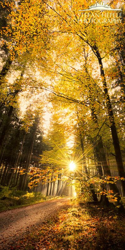 Sun shines on an autumn woodland path (Germany) by Stefan Hefele on 500px