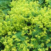 71 best June July Blooms images on Pinterest Garden ideas