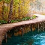 wooden-bridge-in-forest