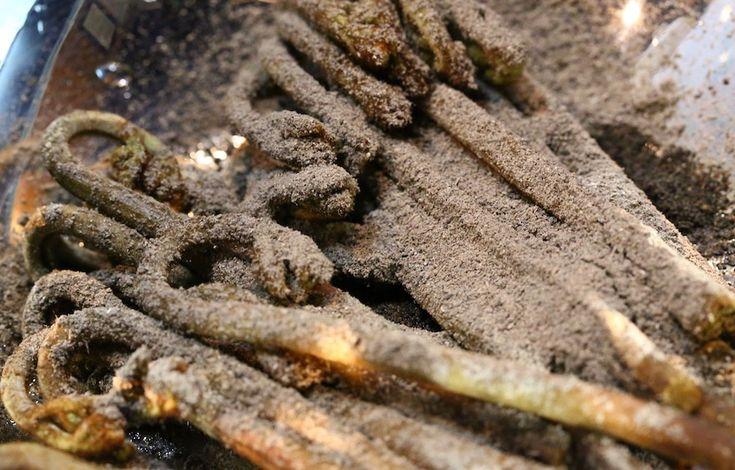 吉野産の蕨