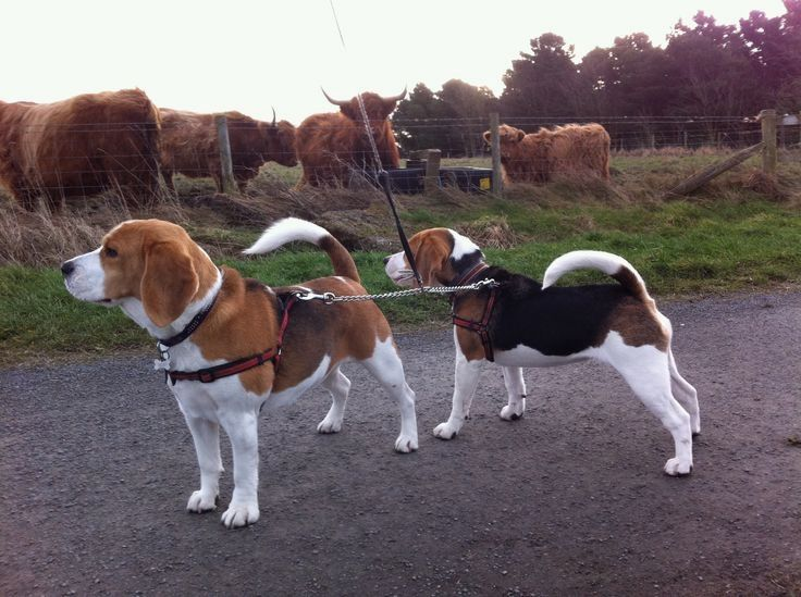 BeaGirls spotting Highlands in the Toon